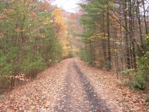 The Virginia Creeper Trail! A great place to run!