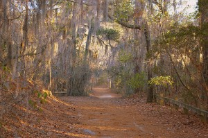 The Cape Henry Trail at First Landing State Park. It was a great place to run!
