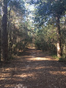 The Miccosukee Greenway! It might be my favorite place to run in Tallahassee!